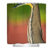 Bare-throated Tiger Heron Tigrisoma Shower Curtain