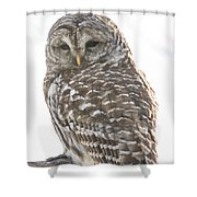 Barred Owl Shower Curtain