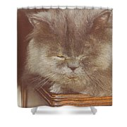 Basie Shower Curtain