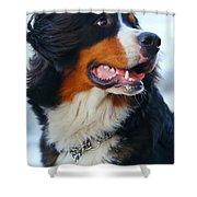 Beautiful Dog Portrait Shower Curtain
