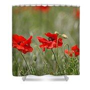 Beautiful Poppies 1 Shower Curtain
