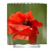 Beautiful Poppies 3 Shower Curtain