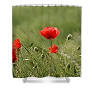 Beautiful Poppies 4 Shower Curtain