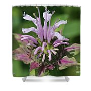 Bee Balm From The Panorama Mix Shower Curtain