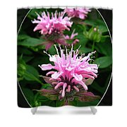 Bee Balm Named Panorama Pink Shower Curtain