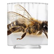 Bee Species Apis Mellifera Common Name Western Honey Bee Or Euro Shower Curtain