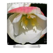 Begonia Named Nonstop Apple Blossom Shower Curtain