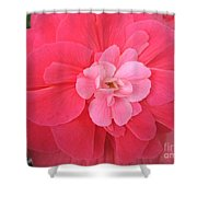 Begonia Named Nonstop Pink Shower Curtain