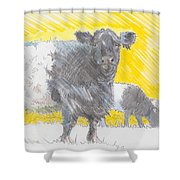 Belted Galloway Cows Shower Curtain