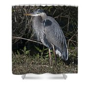 Birds Of The Lowcountry Shower Curtain