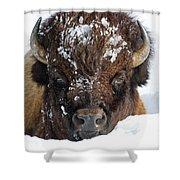 Bison In Snow Shower Curtain