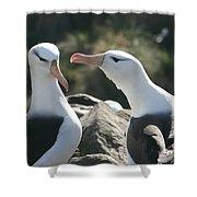 Black Browed Albatross Pair Shower Curtain