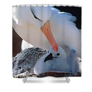 Black-browed Albatross With Chick Shower Curtain by Art Wolfe