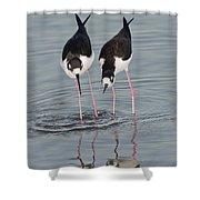 Black-necked Stilt Shower Curtain