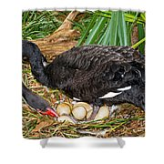 Black Swan At Nest Shower Curtain