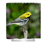 Black Throated Green Warbler Shower Curtain