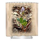 Bloodroot Wildflower - Sanguinaria Canadensis Shower Curtain