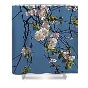 Blooming Trees Shower Curtain