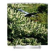 Blue Heron Flight  Shower Curtain