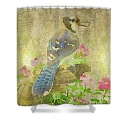 Blue Jay With Texture Shower Curtain