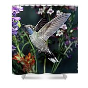 Blue-throated Hummingbird Shower Curtain