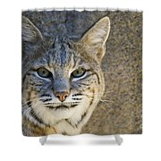 Bobcat Shower Curtain by William H. Mullins