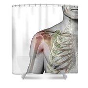 Bones Of The Shoulder Shower Curtain