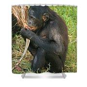 Bonobo Shower Curtain