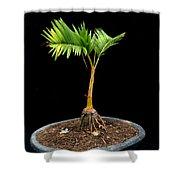 Bonsai Palm Tree Shower Curtain