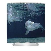 Bottlenose Dolphin  Pair Hawaii Shower Curtain