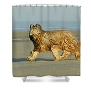 Briard Dog Shower Curtain