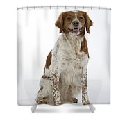 Brittany Spaniel Or Epagneul Breton Shower Curtain