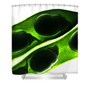 Broad Beans In The Pod Shower Curtain