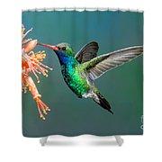 Broad-billed Hummingbird At Ocotillo Shower Curtain