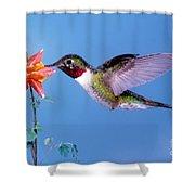 Broad-tailed Hummingbird Shower Curtain
