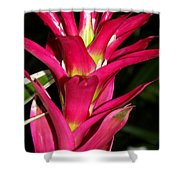 Bromelia Shower Curtain