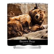 Brown Bear Shower Curtain by Chris Flees