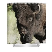 Buffalo Painterly Shower Curtain