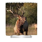 Bugling Bull Elk Shower Curtain