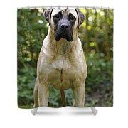 Bullmastiff Dog Shower Curtain