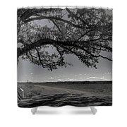 Burr Oak Tree Shower Curtain