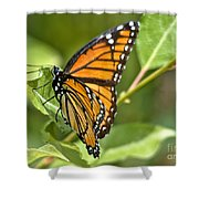 Busy Butterfly Shower Curtain