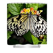 White Tree Nymph - 7 Shower Curtain