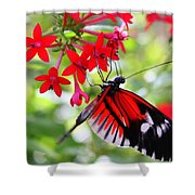 Butterfly On Red Bush Shower Curtain