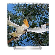 Cacatoes A Huppe Orange Cacatua Shower Curtain