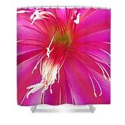Cactus Flower Shower Curtain