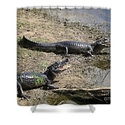 Caiman Shower Curtain