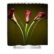 Cala Lily Shower Curtain