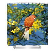 Canari De Couleur Rouge Shower Curtain