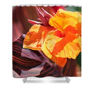 Canna Lily Named Durban Shower Curtain